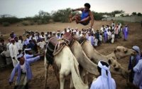 A Simple Guide to Betting On Camel Jumping